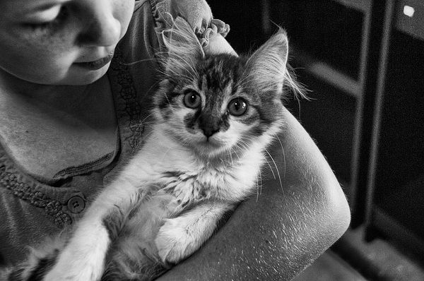 Little girl holding a cat