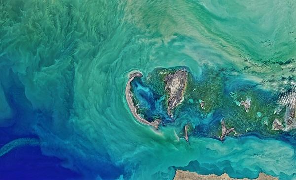 Turquoise phytoplankton